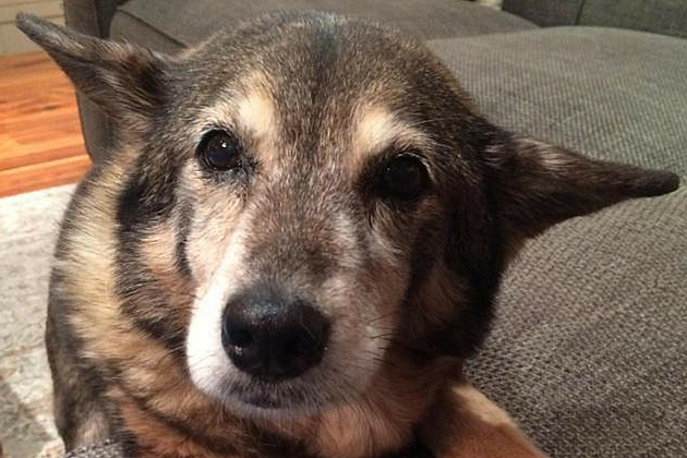 This Senior Pup in Brunswick, Maine is Looking for Her ...