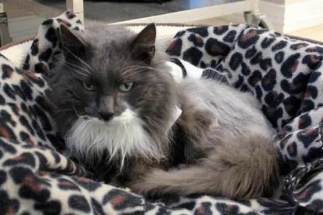 Petfinder.com via Responsible Pet Care of Oxford Hills
