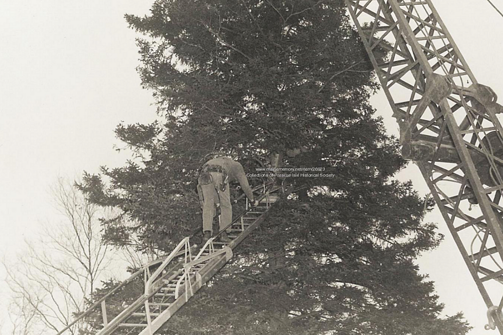 presque isle provided the christmas tree for washington dc in 1959 - Washington Dc Christmas Tree
